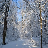 Снежная зима :: Larisa Simonenkova