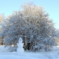 Зимой :: Larisa Simonenkova