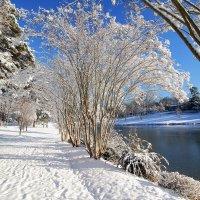 Зимний день... :: Alex ARt