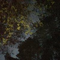 Тёмный лес :: KirillStoyanov