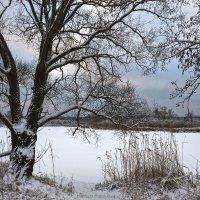 Зимние кучеря :: Наташа Баранова