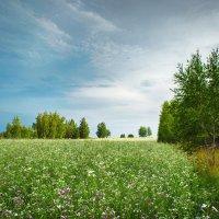 На опушке леса :: Александр Афромеев