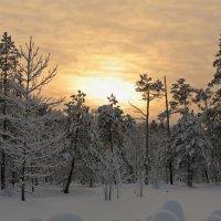 Мгла морозная... :: Сергей