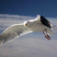 над Белым морем 2 :: Александр Л