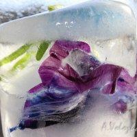 Цветок в кусочке льда :: Анна Воложденинова