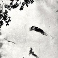 Чайки :: Дарья Соколик