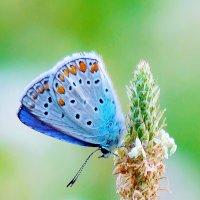 голубой огонек... :: Лариса Н