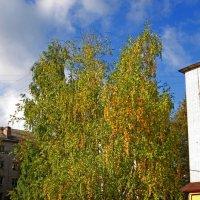 Осень :: Павел Зюзин