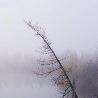 Туман :: Андрей Кийко