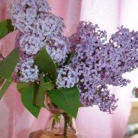 Сирень и виноград. :: Mary Pond