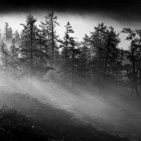 Утренний туман :: Владимир Сковородников