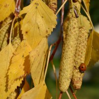 Золотая осень :: Анна Воложденинова