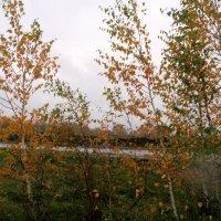 Осень... :: felis felis