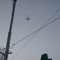 На посадку :: felis felis