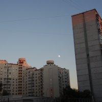 Солнце и Луна - встреча :: felis felis