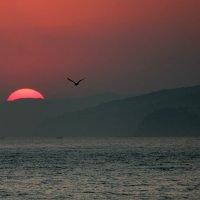 Солнце на закате. :: Наталья Юрова