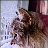 из фотосессии кота(2) :: Алина Мулик