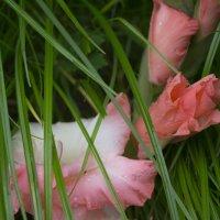 Розовый цветок :: Екатерина Копейкина