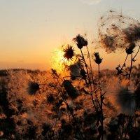 По другую сторону солнца.. :: Александр Герасенков