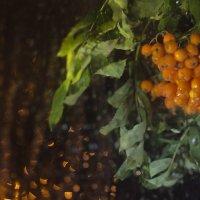 осень :: Любовь Воронова