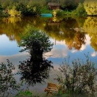 Старый пруд. :: Тамара Бучарская