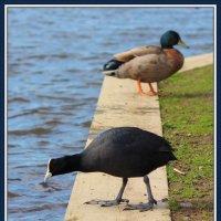птицы :: Natalya секрет