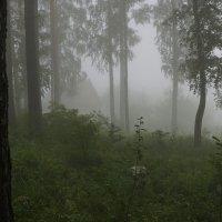 Осеннее утро :: Олег Мартоник