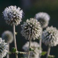 Полевые растения :: Олег Фролов