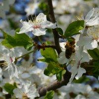 Весна :: Alina Bondar