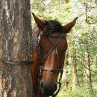 Стеснительная лошадка. :: Сергей Комков