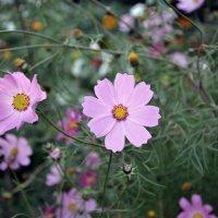 Цветы** :: DIMA GROMOV