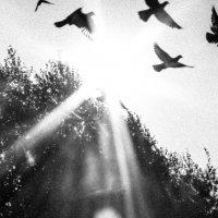 light :: Евгений Темирбеков