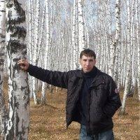 Я в весеннем лесу пил берёзовый сок.... :: юрий Амосов