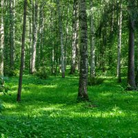 В лесу. :: Сергей Исаенко
