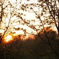 Закат с крыльца моего дома :: Наталия Дурандина