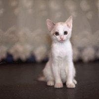 Грустный котенок. :: Алексей Хаустов