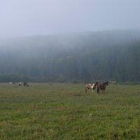 Туман :: Сергей Комков