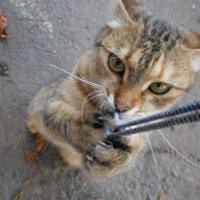 Страшнее кошки зверя нет! :: Наталья Тимошенко