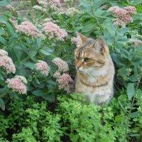 Приподъездная флора и фауна :: Наталья Тимошенко
