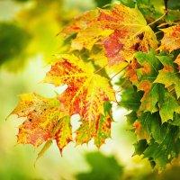 Наступает осень :: Александр Казаков