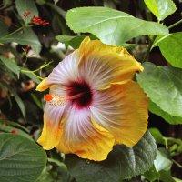Цветок :: Яков Геллер