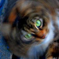 Кошак :: Алеся Печкурова