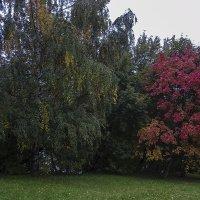 Краски осени :: Андрей Шаронов