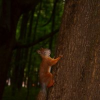 Хозяйка леса :: Анастасия Светлова