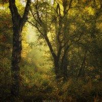 Утренний лес :: Сергей Щербаков