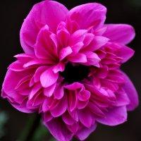 Цветы :: Виктор (Victor)