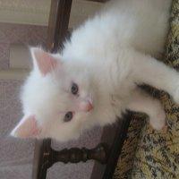 Котик *Лиза* :: Hyday Music
