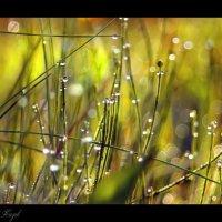 Как прекрасен флоры  мир...... :: Елена Kазак