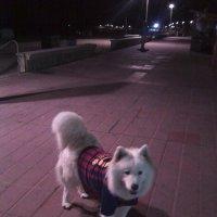 Вечерняя фотосессия :: Dogdik Sem