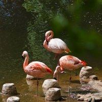 Фламинго :: tobol-b